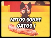 Mitos sobre Gatos
