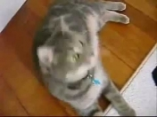 Videos de gatos graciosos