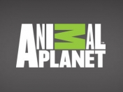 La crueldad animal detrás de Animal Planet